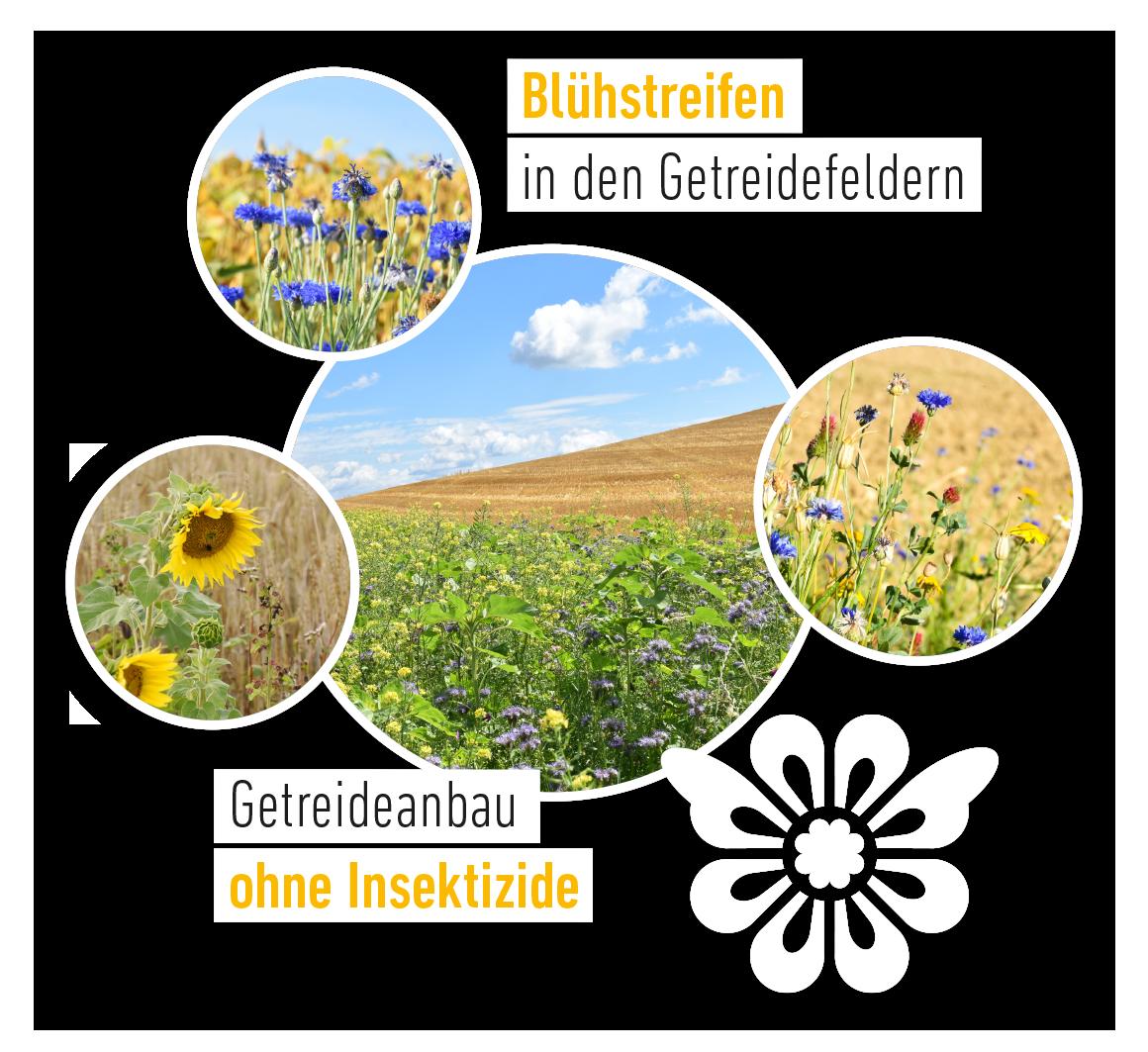 Blumenkorn Blühstreifen in den Getreidefeldern ohne Insektizide